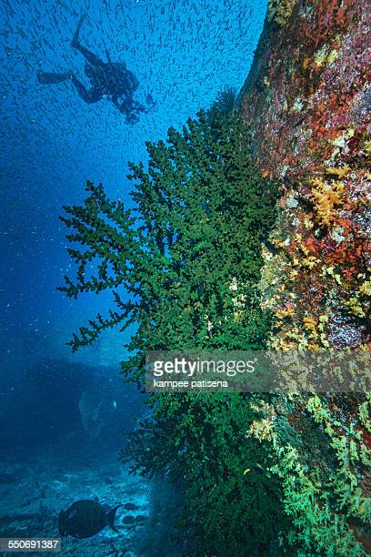 coral reef with soft corals Andaman Sea, Thailand.