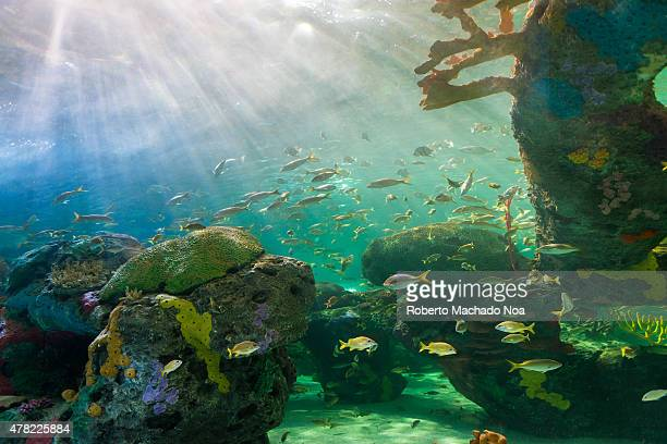 S AQUARIUM TORONTO ONTARIO CANADA Coral reefs are underwater structures made from calcium carbonate secreted by corals Coral reefs are colonies of...