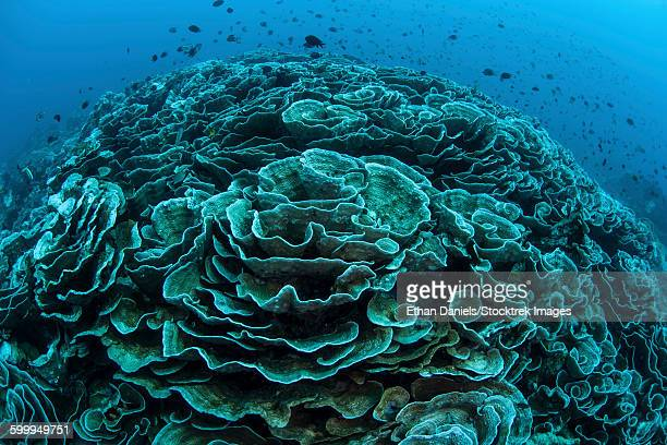 Corals are beginning to bleach on a reef in Indonesia.