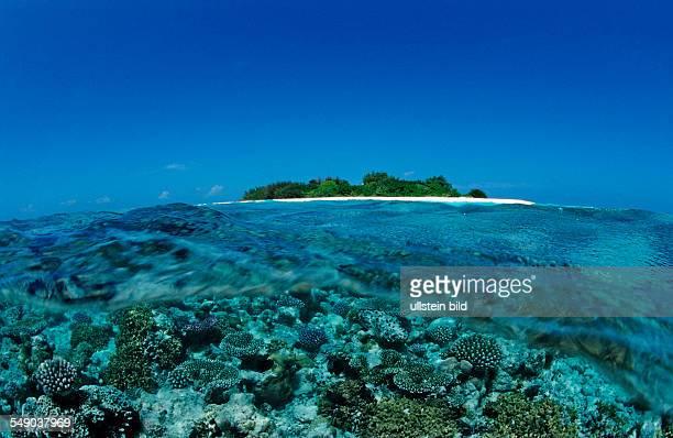 Corals close to Maldive Island Maldives Indian Ocean Meemu Atoll
