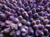 Korallen im Korallenriff im Meer