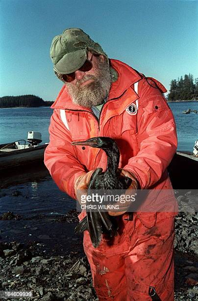Cordova fisherman John Thomas carries an oilsoaked sea bird 03 April 1989 at the bird rescue center in Valdez more a week after the beginning of an...