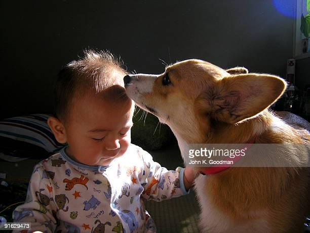Corgi and baby boy