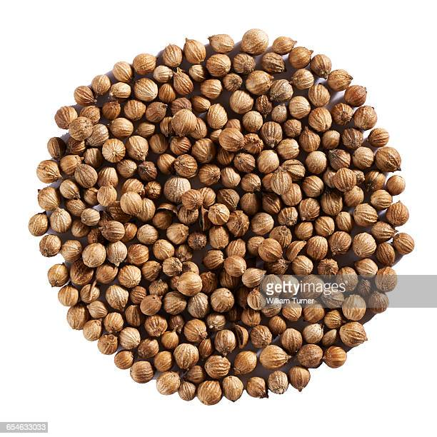 Coriander seeds in a circle on white background