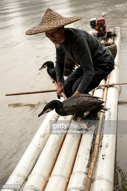 Cormorant fisherman on a raft on the river Li