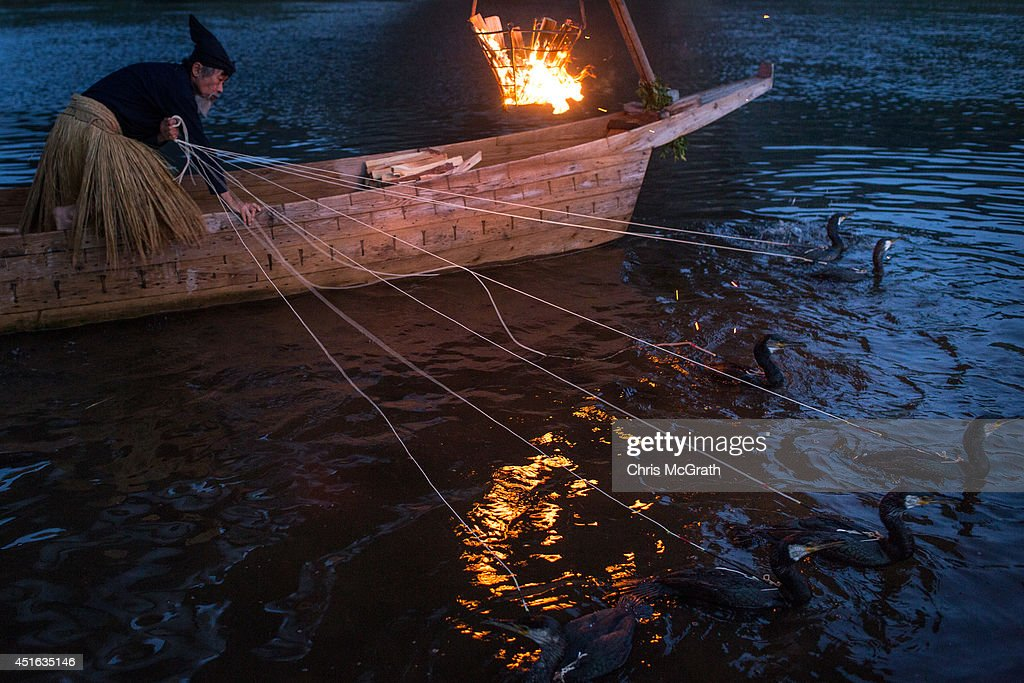 A cormorant master prepares his sea cormorants for the nights 'Ukai' on July 2 2014 in Gifu Japan In this traditional fishing art 'ukai' a cormorant...