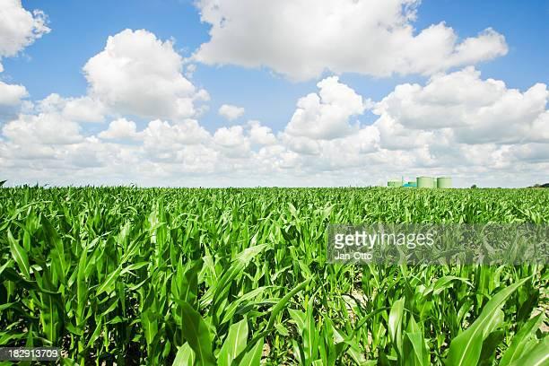 Mais und biogas fahren