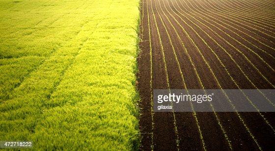 Corn and wheat fields.