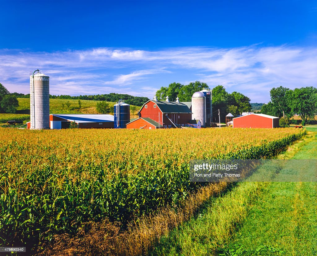 Corn crop and Iowa farm at harvest time