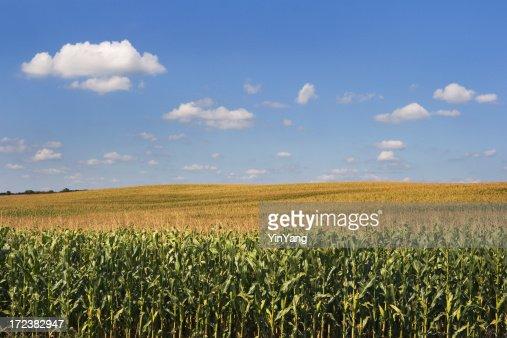 穀物トウモロコシの穀草の農業ファームフィールド田園風景