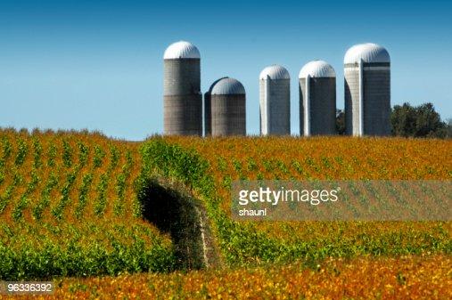 Corn Field & Silos
