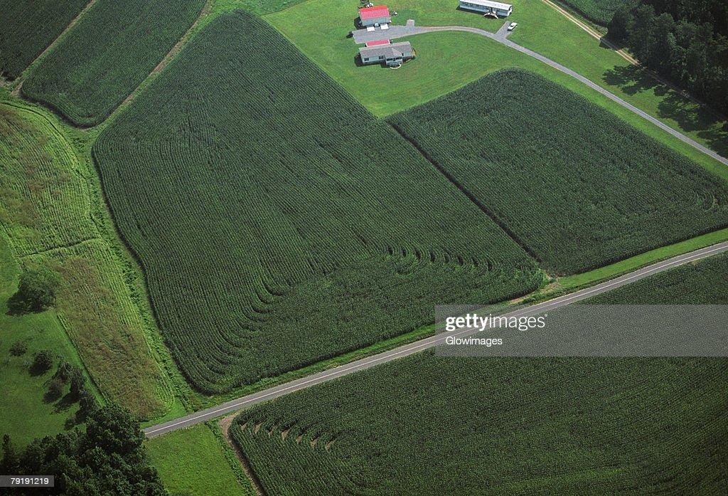 Corn field, Tennessee : Foto de stock