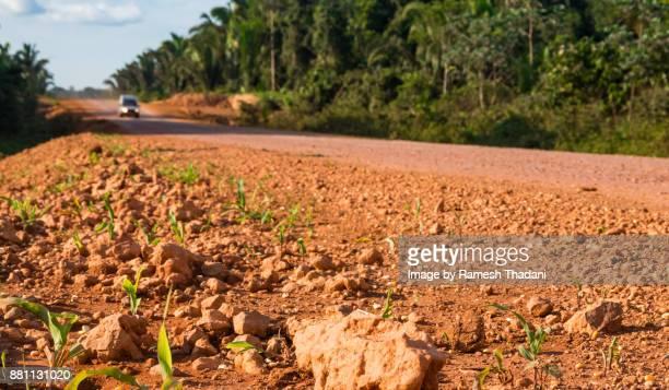 Corn growing along the grain exporting corridor
