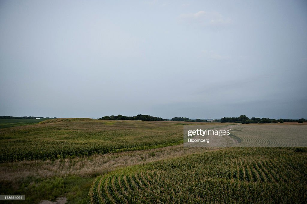 Corn grows in a field outside of Ohio, Illinois, U.S., on Wednesday, Aug. 28, 2013. Wheat futures fell for a third straight day on signs of slack demand for inventories from the U.S., the worlds largest exporter, while soybeans dropped and corn gained. Photographer: Daniel Acker/Bloomberg via Getty Images