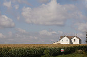 Corn grows on a farm August 17 2011 near Fredericksburg Iowa High grain prices and increasing yields have been an economic windfall for farmers who...