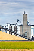 Corn harvest in the fall in the mid-west of USA. The harvesting and processing of the corn crop, the processing facilities doing finishing work on the grain, the product are stored in the grain silos