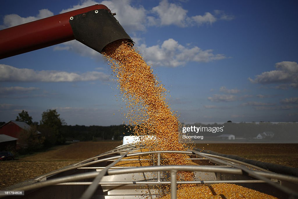 Corn is deposited from a combine harvester into a semi-trailer during a harvest on farm land leased to Tucker Farms in Shelbyville, Kentucky, U.S., on Tuesday, Sept. 24, 2013. Private exporters reported to the U.S. Department of Agriculture (USDA) export sales of 197,200 metric tons of corn for delivery to Mexico during the 2013 and 2014 marketing year. Photographer: Luke Sharrett/Bloomberg via Getty Images