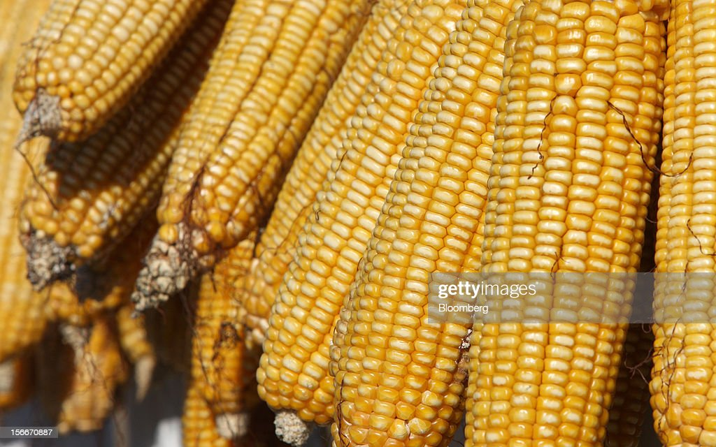 Corn is dried in Pinggu, on the outskirts of Beijing, China, on Saturday, Nov. 17, 2012. China's gross domestic product slowed to 7.4 percent in the July-September period from a year earlier, the weakest in three years. Photographer: Tomohiro Ohsumi/Bloomberg via Getty Images