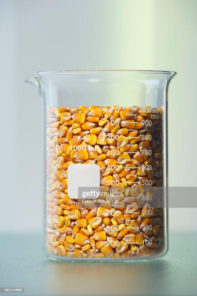 Corn kernels in beaker