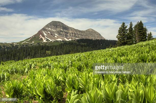 Corn Lilies and Engineer Mountain
