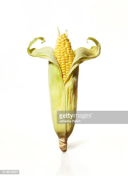 Corn muscle-man
