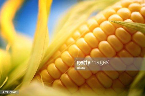 Corn on the cob, closeup.