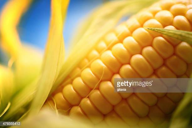 Corn on the cob, closeup.
