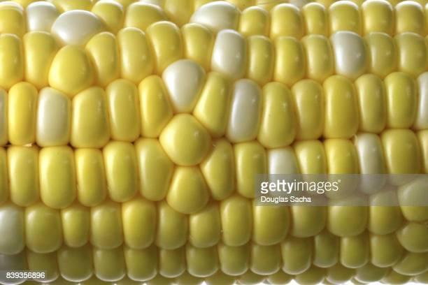 Corn on the cob (zea mays)