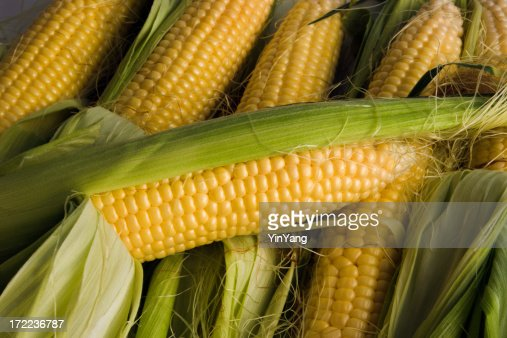 Corn on the Cob, Stacked Sweetcorn Crop of Fresh Vegetables