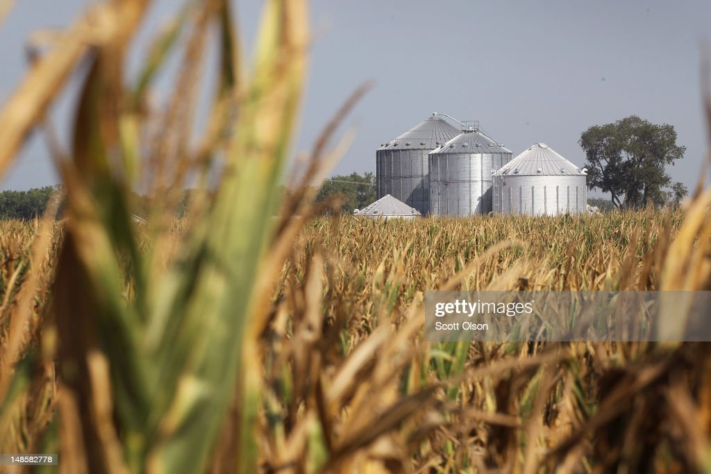 Corn plants struggle to survive in a drought-stricken farm field on July 18, 2012 near Vincennes, Indiana. The corn and soybean belt in the middle of the nation is experiencing one of the worst droughts in more than five decades. Indiana was the nation's fourth largest corn producer in 2011.