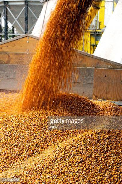 corn pour