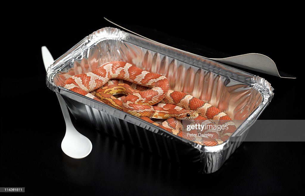 Corn snakes in fast food packaging : Stock Photo