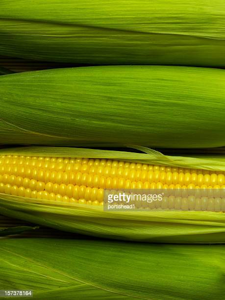 A corn with the husk leaves removed to reveal the grains