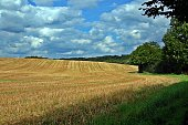 Cornfield after harvest