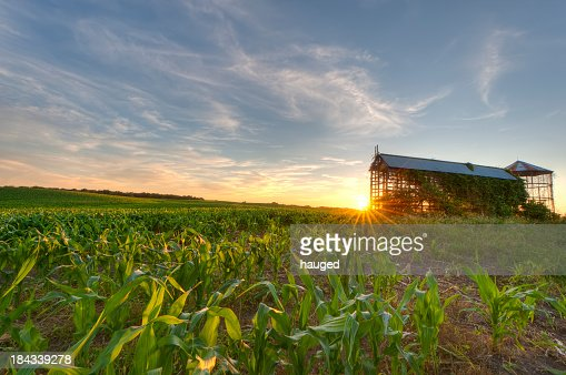 Cornfield and Grain bin at Sunset