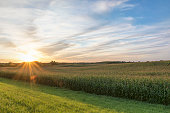 Corn - Crop, Plant, Crop, Field, Farm, sunset