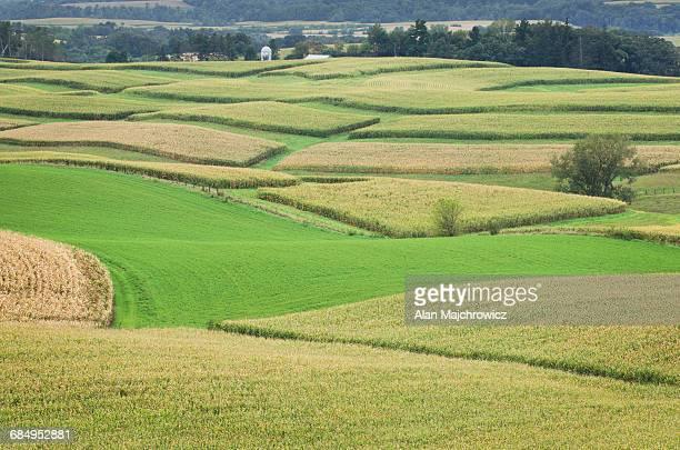 Cornfields SE Minnesota