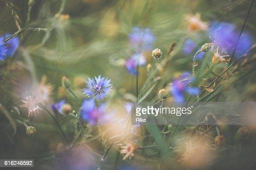 Azulejo en verano : Foto de stock