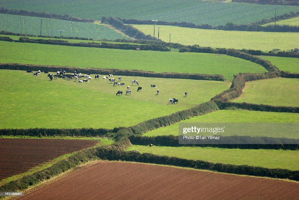 Cornish Countryside : Stock Photo
