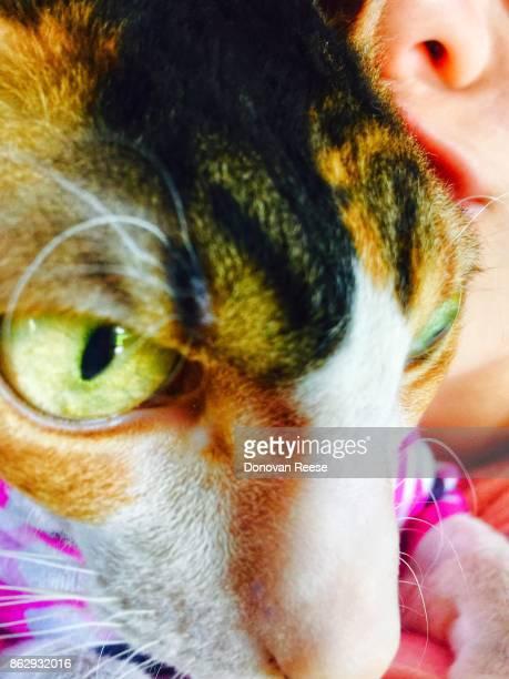 Cornish Rex cat and little girl