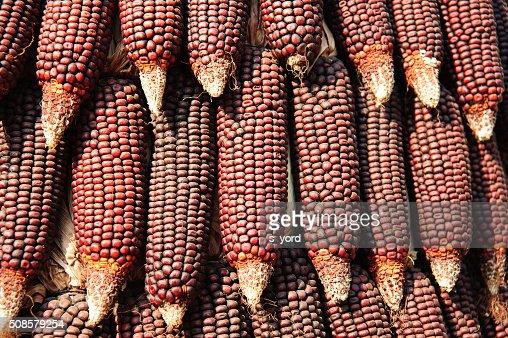 Corns : Stockfoto