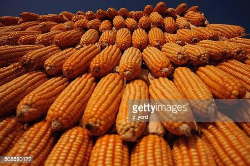 Corns : Stock Photo