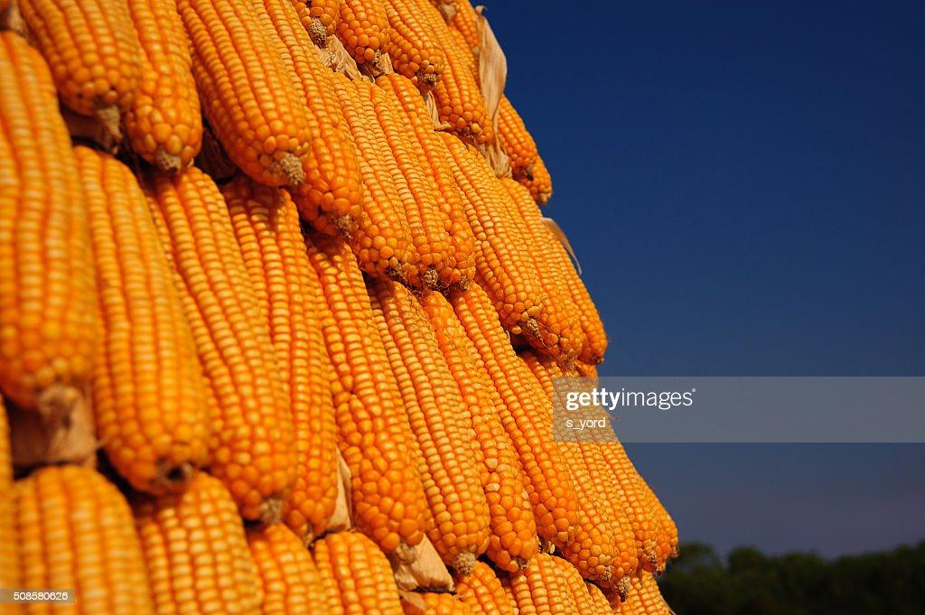Corns : Foto stock