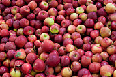 Organic Many fruits background - Cortland apple