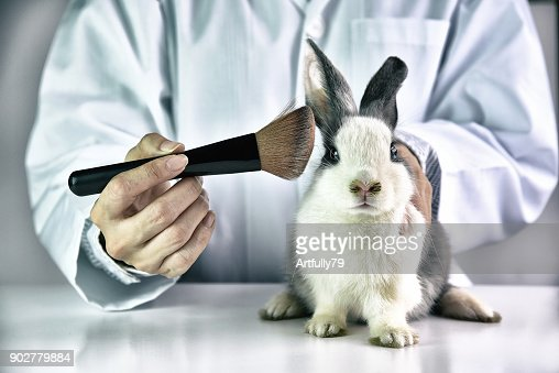 Cosmetics test on rabbit animal, Scientist or pharmacist do research chemical ingredients test on animal in laboratory, Cruelty free and stop animal abuse concept. : Stock Photo