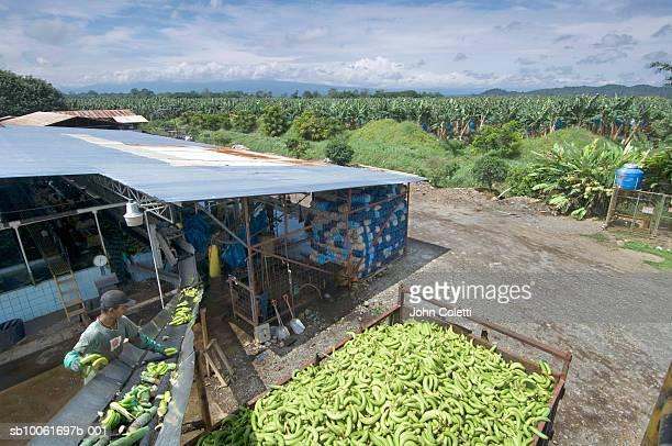 Costa Rica, banana farm in Puerto Viejo, elevated view