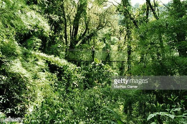 Costa Rica, Monteverde Cloud Forest, couple on 'sky walk'