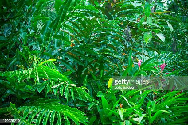Costa Rica Regenwald mit üppiger vegetation