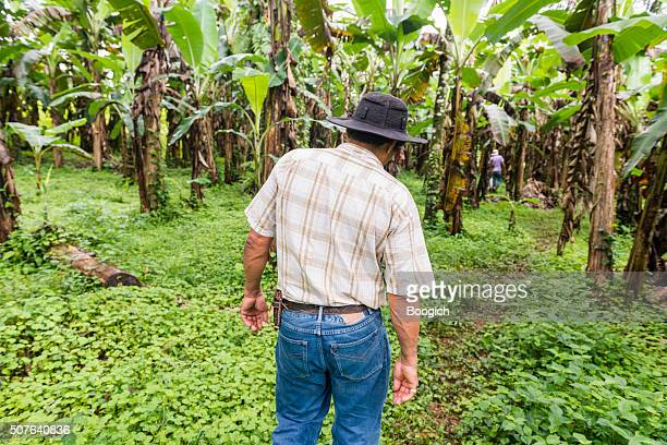 Costa Rican Rancher Walks Through Banana Trees on Farm
