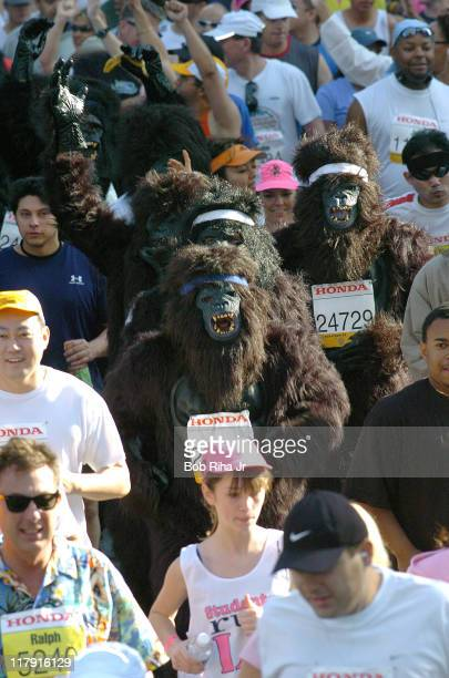 Costumed apes shared the pavement with more than 25000 marathon runners participating in the 20th LA Marathon one of the largest marathon races in...
